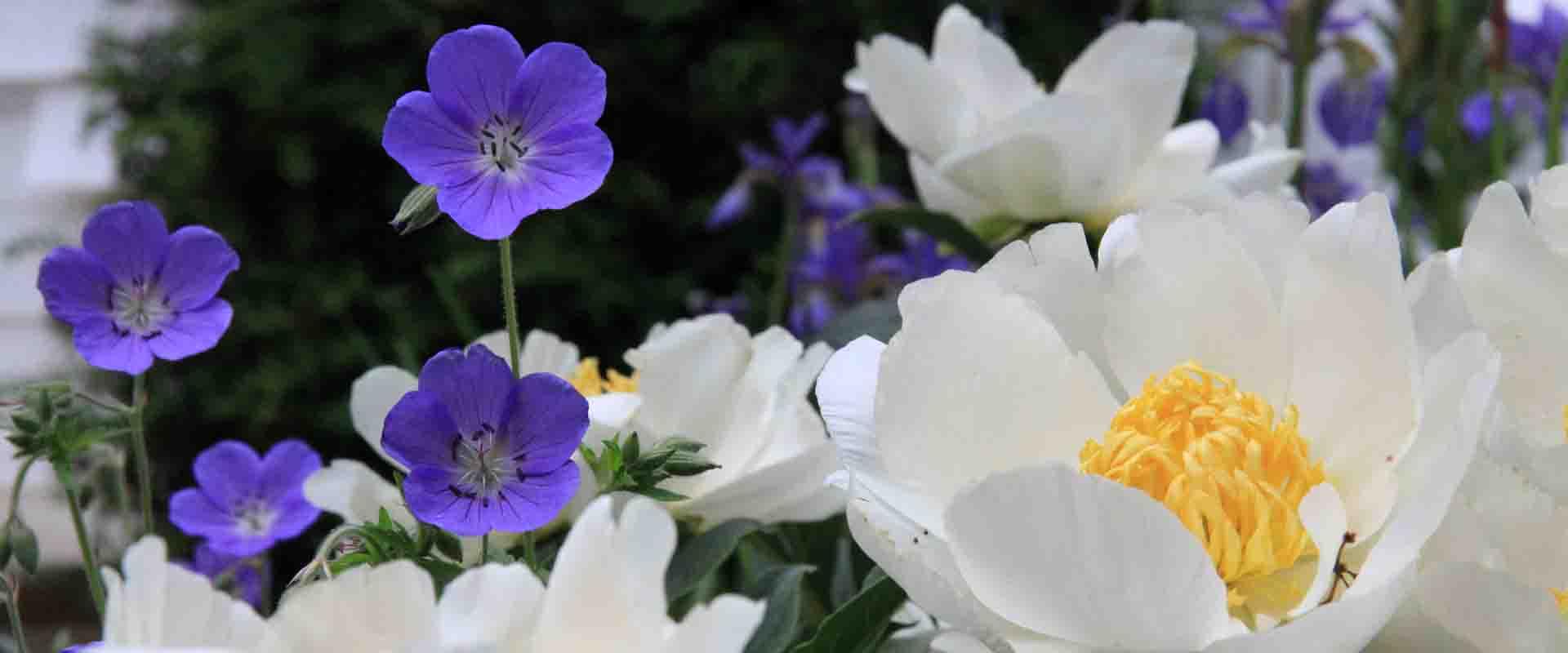 Plantlife jardiner a y paisajismo for Jardineria huelva